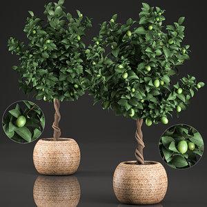 decorative lime tree interior 3D