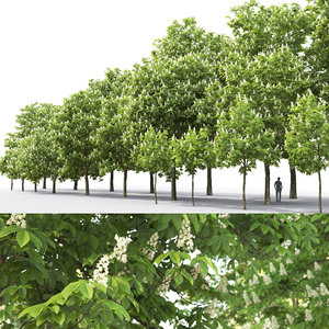 3D model flowering chestnut trees 1