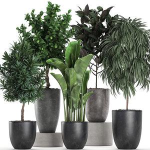 ornamental plants interior black model