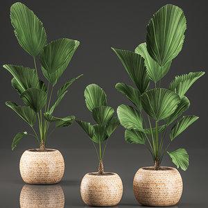 decorative licuala interior basket model