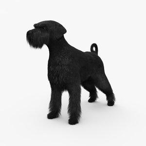 schnauzer dog animal 3D model
