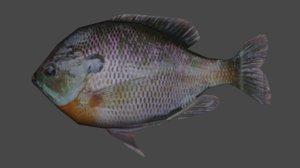fish bluegill 3D model
