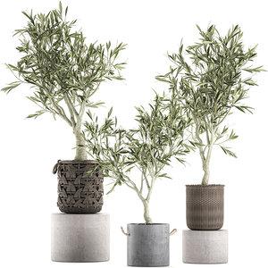 decorative olive tree interior 3D model