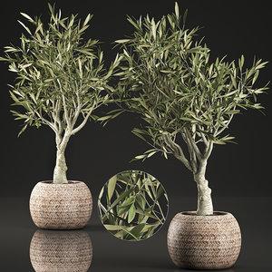 decorative olive tree interior model
