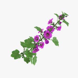 malva mallow flowers 3D model