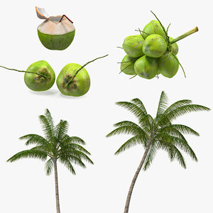 3D coconuts fruits palm