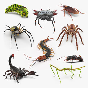creeping insects 3 3D model