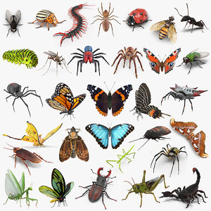 insects big 5 collections 3D model