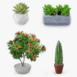 ornamental plants pots 3D model