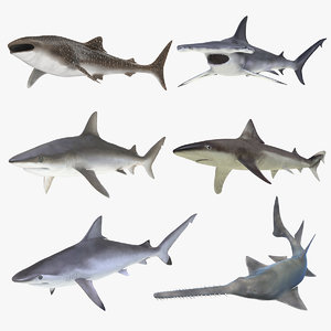 3D rigged sharks 7
