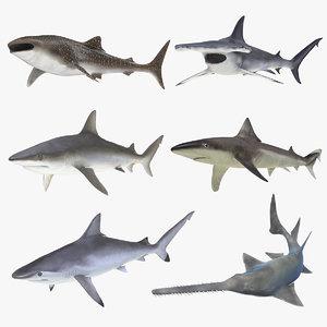 3D rigged sharks 7