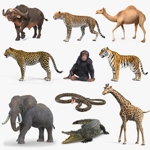 3D rigged african animals 7