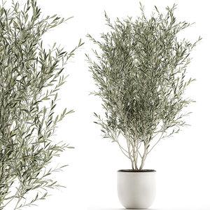3D decorative olive tree flowerpot model