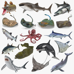 rigged fishes 5 3D