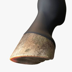 realistic horse hoof 3D model
