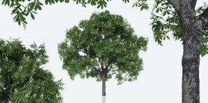 horse chestnut trees nature 3D model