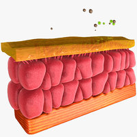 Epithelial Cell