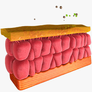 3D model epithelial cell
