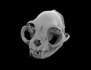 3d skull cat british short model