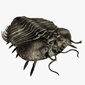 3D reproduction - trilobite cybele
