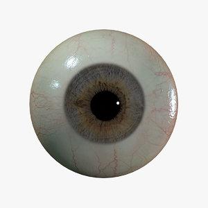human eyeball 3D model