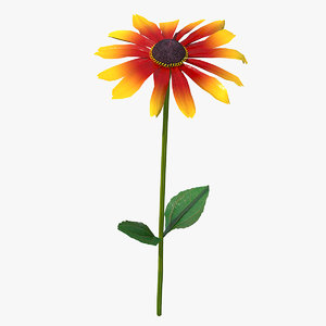 black eyed susan rudbeckia 3D model