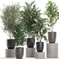 Decorative plants in a black flowerpots 648