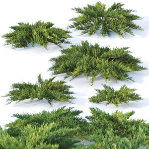 3D juniper bushes
