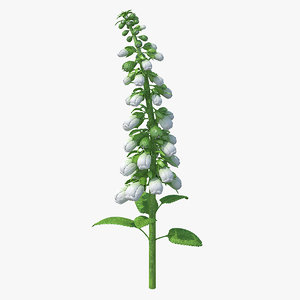 white foxglove stem 3D model