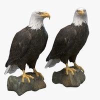 Bald Eagle(1)