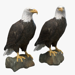 3D model bald eagle bird