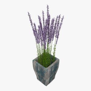 3D model lavander wooden plant pot