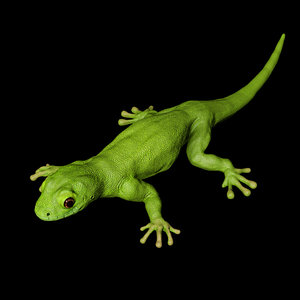 3D model geco