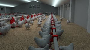 3D chickens poultry farm