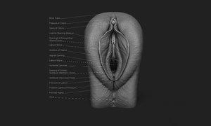 anatomy vagina 3D model