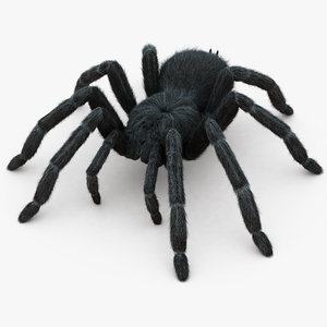 3D realistic tarantula hair animation