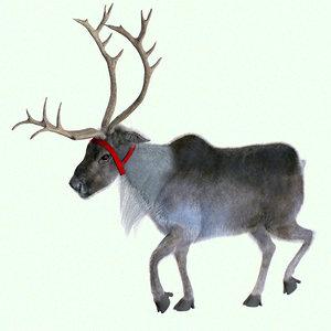 3D model reindeer