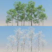 10+10 Fagus Trees