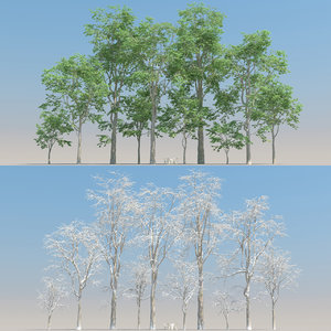 3D 10 fagus tree snow model