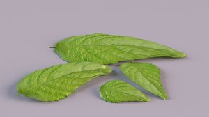 3D model lemon mint leaf plant