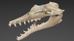 basilosaurus skull 3D model