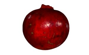 3D model pomegranate fruits