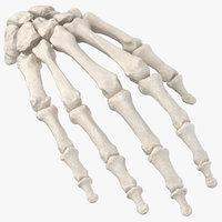 Human Hand Bones Anatomy 01 White
