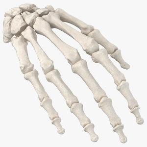 human hand bones anatomy model