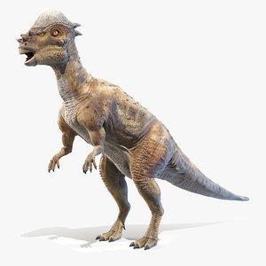 pachycephalosaurus p model