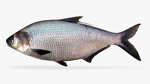 3D model gizzard shad