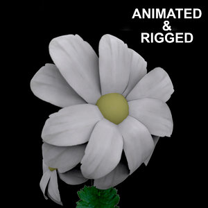 flowers open animation 3D model