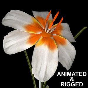 3D flowers open animation model