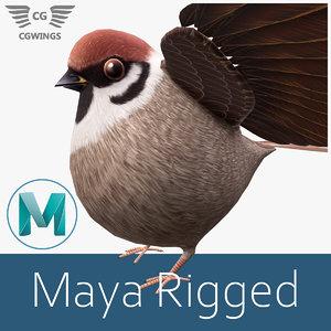 3D sparrow bird nature model