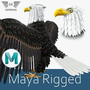eagle bald 3D